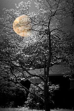 la lune joue a cache cache.