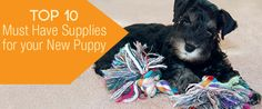 What was your favorite new puppy supply product? https://www.sitstay.com/blogs/good-dog-blog/top-10-must-have-supplies-for-your-new-puppy?utm_campaign=coschedule&utm_source=pinterest&utm_medium=SitStay%20Dogs&utm_content=Top%2010%20Must%20Have%20Supplies%20For%20Your%20New%20Puppy