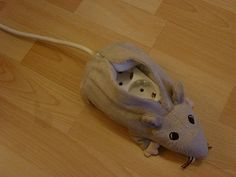 Electrified rat. It's a small Ikea hack – an electric extension cord hidden into an Ikea rat.