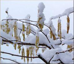 haïku,ryŌkan,hiver,glace,neige,anthologie de la poésie japonaise classique,photo de neige,pyrénées,poésies