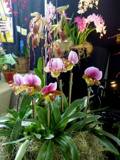 Pacific Orchid Expo