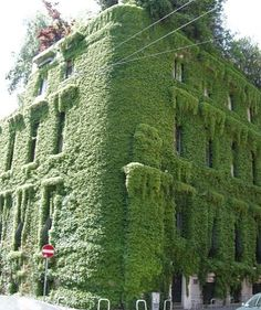 IVY HOUSE IN MILAN, ITALY  Mykola D.
