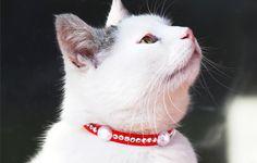 Non-Profit-Tierschutzaktion: 100 % sicheres Halsband aus Papier und hält ca. 2 Monate. Du kannst es selbst basteln. Starterkit unter www.happycat.tips