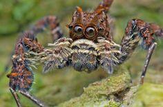 6 Superpoderes reais e assustadores das aranhas