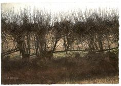 Hedge - mixed media on board - by Mike Salt
