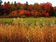 Autumn in Algoma