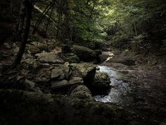 In the heart of the forest by Evan Karageorgos, via Flickr
