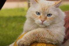 860x571, 169 Kb / кот, мячик