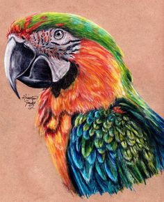 Catalina Macaw by ~KristynJanelle on deviantART