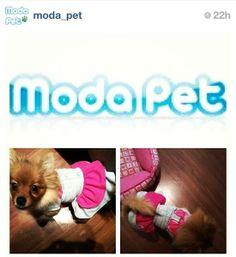 MEU PET NA MODA   Dory usando Vestido Polo para passear no fim de semana! #meupetnamoda  (mamãe: Paulinha)