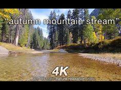 "Endless Looping Scene: ""Autumn Mountain Stream"" Relaxing Scene w/ Sounds Relaxing Rain Sounds, Relaxing Gif, Relaxing Music, Ocean Sounds, Nature Sounds, Virtual Travel, Virtual Tour, Forest Sounds, Virtual Field Trips"