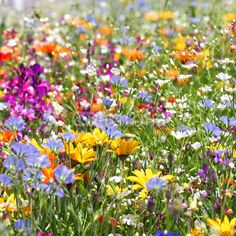 Summer flower field.Baby I`m going to work now and will be back about 5-6am. Sleep tight ,be kind to yourself honey,be very kind on your Birthday week .I love you sweetheart I love you Liz:)