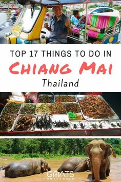 From night markets to the elephant sanctuary & eating insects to Thai cooking classes, here's what to do in Chiang Mai including the best hotels. Tell is in comment if there's anything else you would add to the list | #visitthailand #thailandtravel #thailandtourism #thailand #norththailand #bestofthailand #chiangmai #thaitravel #thaitips #food #market #temples #elephants #nature #asiatraveltips #asianadventures #travel