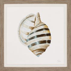 Modern Shell with Teal I Framed Painting Print
