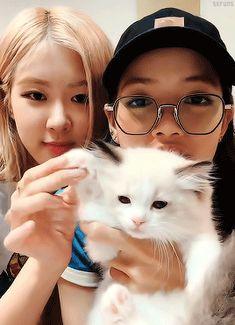 bonjour, mon cœur - sefuns: Introducing Lisa's new kitten, Lily ♡.