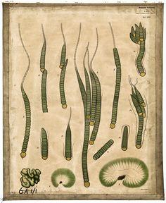 McGregor Museum » Blue Green Algae Berlin, Biology Art, Green Algae, Longest Word, Things Under A Microscope, Chocolate Art, Art Base, Science Art, Gravure