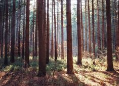 The Enchanting Pine Forest In Ohio That Will Leave You Mesmerized Nature Landscape, Landscape Photos, Landscape Photography, Pine Trees Forest, Oak Forest, Photos Black And White, Tiny House Village, Cactus Drawing, State Forest