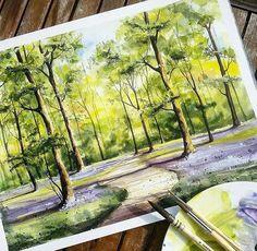 Sunny forest scene