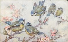 five blue/yellow/white birds on cherry blossom tree