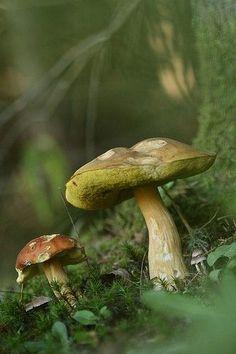 Nature's Fungi