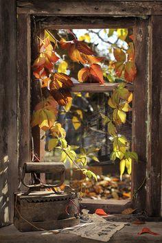 "gyclli: "" Autumn Window.. By Svetlana Pavlovian """