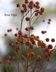 Florabundance - Red Rose Hips