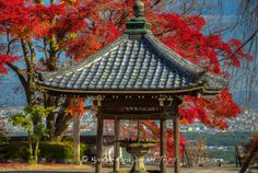 https://flic.kr/p/BKHMC8 | Yoshimine-dera, Ōharano, Kyoto, Autumn 2015! | Today was another beautiful autumn day in Kyoto. Seized the opportunity and went to Yoshimine-dera (善峰寺) on Mt. Nishiyama in Ōharano, Kyoto. This is one of the many pictures I took with a view of Kyoto City in the back ground. Picture taken from the Shaka-dō (釈迦堂) area of Yoshimine-dera (善峰寺).