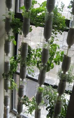 No balcony or garden? Try window farming. A vertical leafy vegetable and herb…