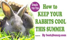 How to keep rabbits cool in summer. Keep your bunny cool this summer with our simple top tips. Easy ways to help your rabbit cope with hot sunny weather. http://best4bunny.com/keep-rabbits-cool-summer-simple-top-tips/