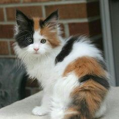 These cute cats will brighten your day. Cats are amazing friends. Cute Fluffy Kittens, Kittens Cutest Baby, Cute Cats And Kittens, Baby Cats, I Love Cats, Cool Cats, Adorable Kittens, Pretty Cats, Beautiful Cats