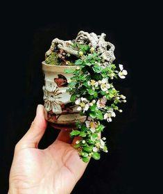 Bonsai Plants, Bonsai Garden, Ikebana, Mame Bonsai, Japanese Artwork, Art Asiatique, Little Gardens, Miniature Trees, Growing Tree