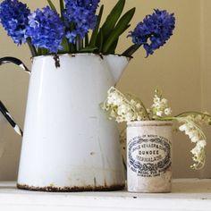 Blue Hyacinths in white enamel pitcher