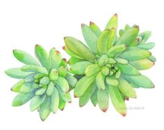 Succulent Print of watercolour painting S0316 5 by LouiseDeMasi