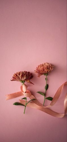 Wallpaper Stairs, Modern Wallpaper, Flower Wallpaper, Iphone Wallpaper, How To Install Wallpaper, Interior Photography, Pink Love, White Flowers, Rose Flowers