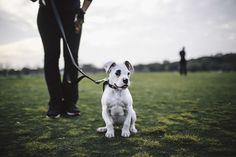 We love Zilker Bark Photography! #dogs #texas