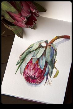 rysunek Entries feed for wire_ru Protea Art, Watercolor And Ink, Watercolor Flowers, Watercolor Paintings, Watercolors, Art Floral, Australian Native Flowers, Illustration Blume, Guache