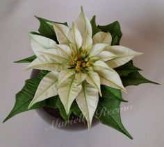 My new white Poinsettia ( sugar flower)