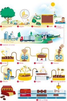 Resultado de imagen para circuito productivo del cacao para niños