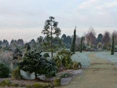 Frosty January morning! | Walkers Nurseries
