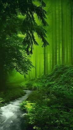 🌅 If you are a fan of the forest adventure then you need to check o… – Winterbilder Nature Pictures, Beautiful Pictures, Nature Images, Nature Hd, Nature Tree, Landscape Photography, Nature Photography, Hd Nature Wallpapers, Forest Adventure