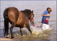 This horse looks scared of water, so the girl is coaxing it in with a carrot. I love that the horse is unintentionally splashing her while attempting to get in the water. Such a touching picture. (by nino)