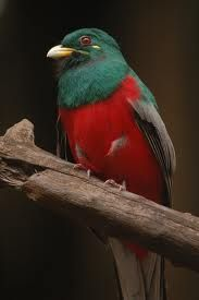 Mkhaya is a great place to see the Narina Trogon - keep your eyes and ears open. Great Places, Places To See, Game Reserve, East Africa, Colorful Birds, Sierra Leone, Beautiful Birds, Birds 2, Hummingbirds