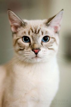 What a pretty kitty!