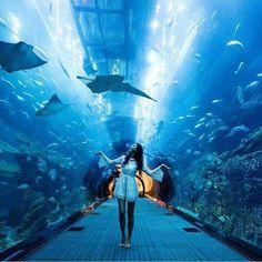 15 Best Ideas for travel goals dubai Dubai City, Hotel Dubai, Dubai Mall, Dubai Resorts, Dubai Travel, New Travel, Travel Goals, Abu Dhabi, Aquariums