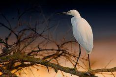 Michele Ferrato Birds