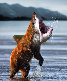 Bear shark. I laughed out loud at this in the middle of an awkward silence