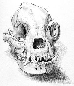 Bulldog skull by bigredsharks