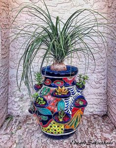 You have a small open shelf in your living room or balcony or varendah? This is a perfect thing to adorn the shelf! Planting Succulents, Planting Flowers, Amazing Gardens, Beautiful Gardens, Mexican Garden, Mexican Flowers, Strawberry Planters, Talavera Pottery, Outdoor Plants