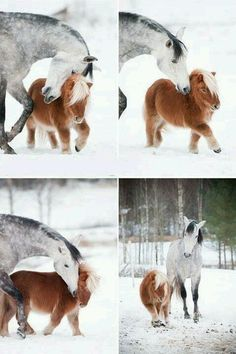 (: I want to have a little miniature pony