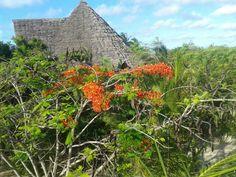 Hidden roof of villa Lisa. #Zanzibar